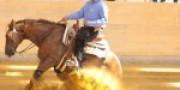 reining-training
